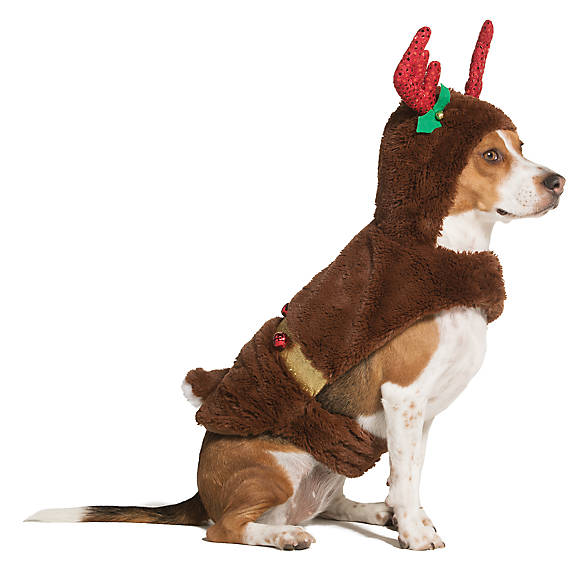 icon - My Favorite Large Dog Christmas Costumes! - Balance & Blessings
